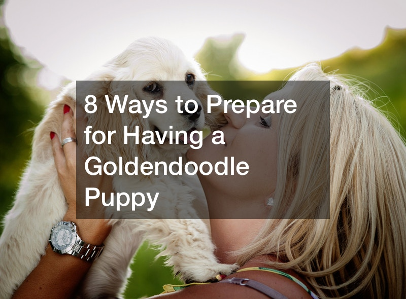 how to prepare for a goldendoodle puppy